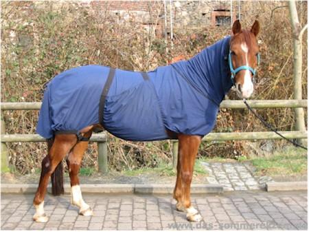 Pferd mit Ekzemdecke